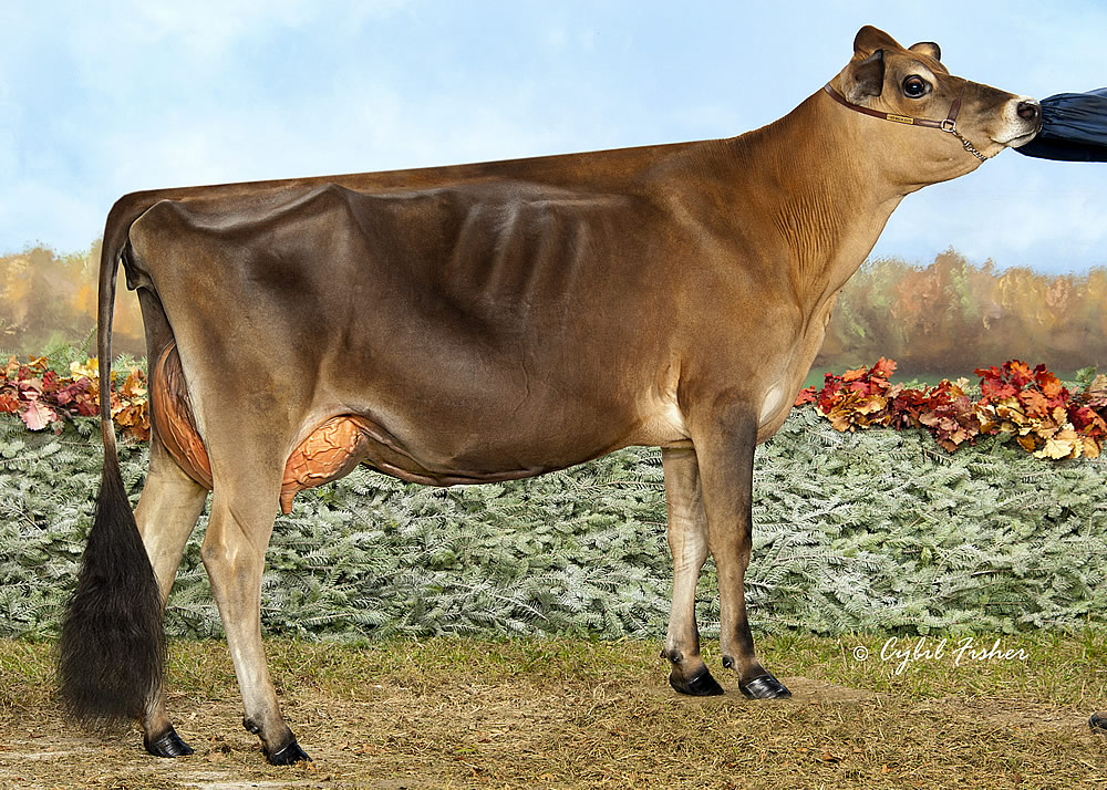 Kueffner Registered Holsteins Jerseys